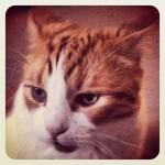 Another cat portrait