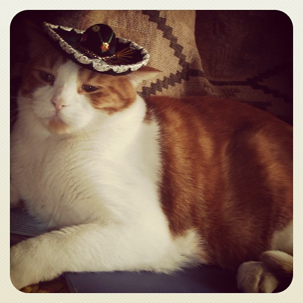 Cat with a mexican hat