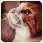 Another cat portrait – looking up