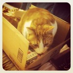 The box from Amazon arrived: guess who's in it now?!