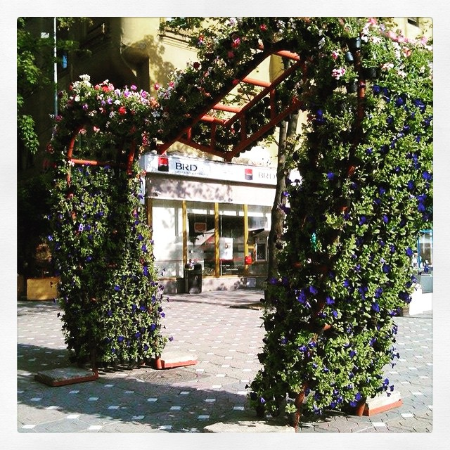 Green flower structure in Timisoara downtown, Romania, by Flavia G.