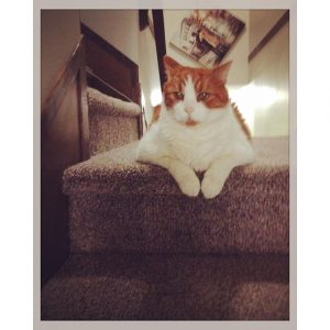 Mr-Tom-These-stairs-are-mine-intercer-cat-cats-pet-pets-petsofinstagram-catsofinstagram-orangecat-wh