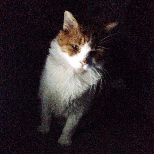 Mr Tom in the dark