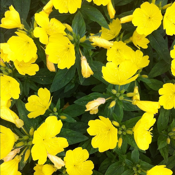 A bunch of yellow flowers