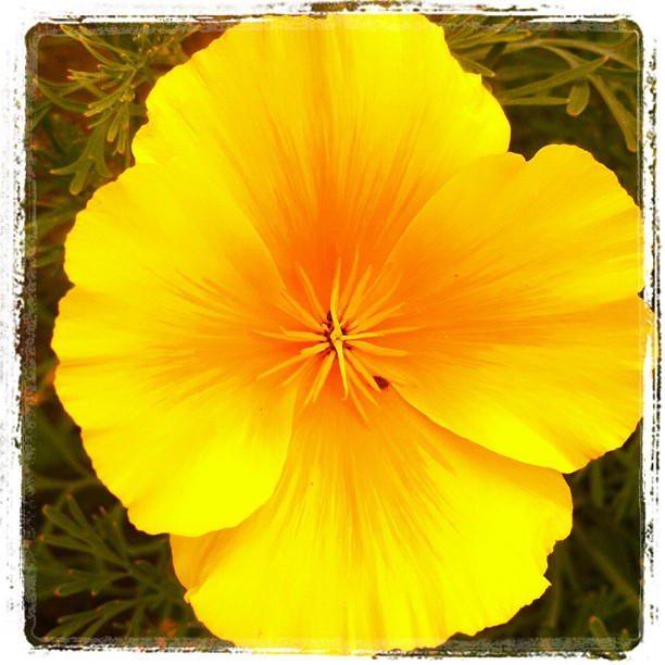 Nice blossomed yellow flower