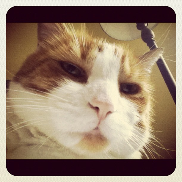Cat mustache portrait with a lamp