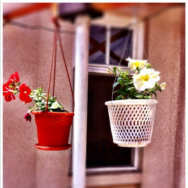 House flowers