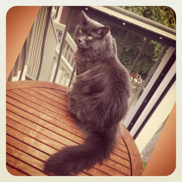 Very nice cat fur (a friend's cat)