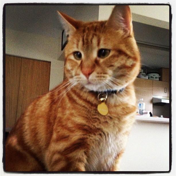Young cat portrait