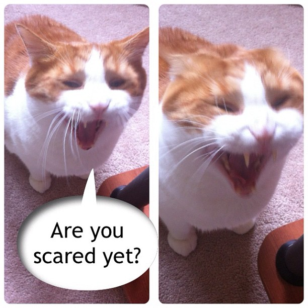 Are you scared yet? Cat roaring or simply yawning?