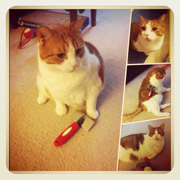 Cat morning brush ritual