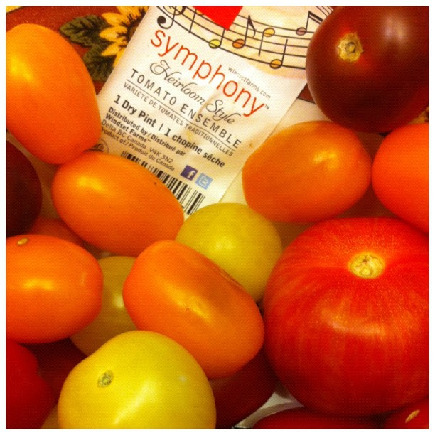 Symphony tomato variety