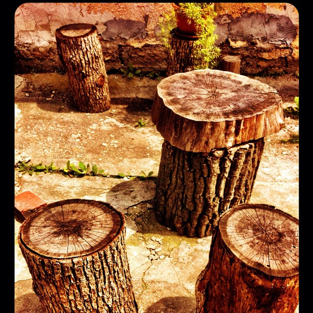 Five old stumps