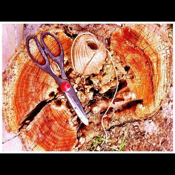 Thread & scissors on a stump
