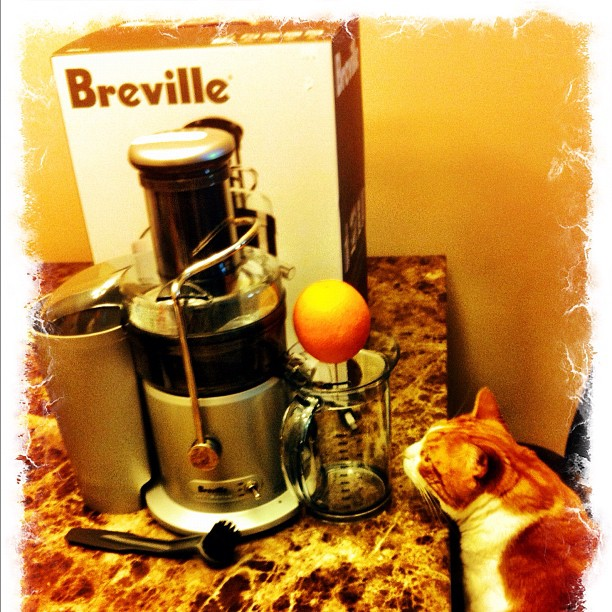 Even cats are interested in Breville Fountain Plus Juicer!