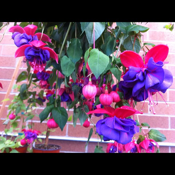 Nice colorful garden flowers