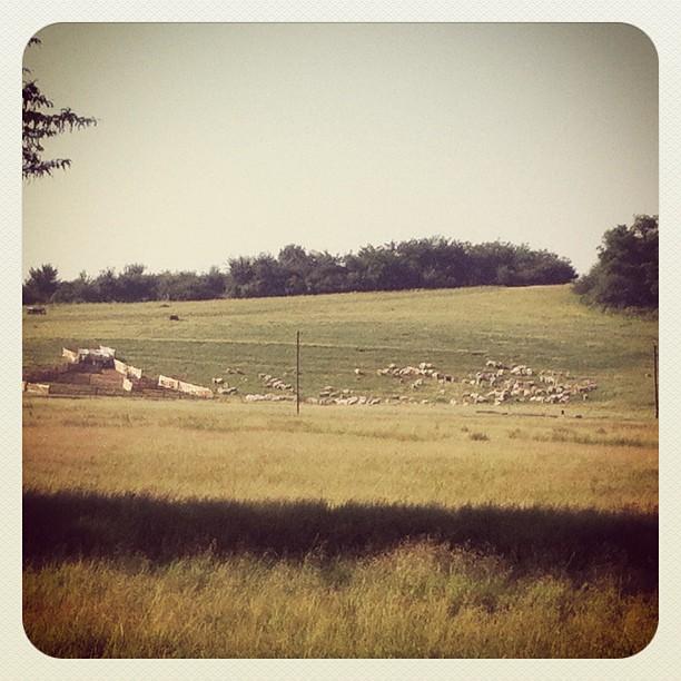 Sheep to the sheepfold