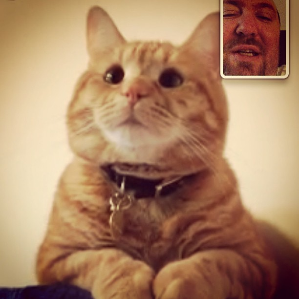 FaceTime with Charlie, my daughter's cat. He seems to listen to me!