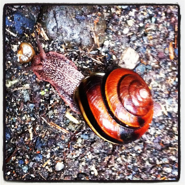 Snail in action at Bridal Falls, BC