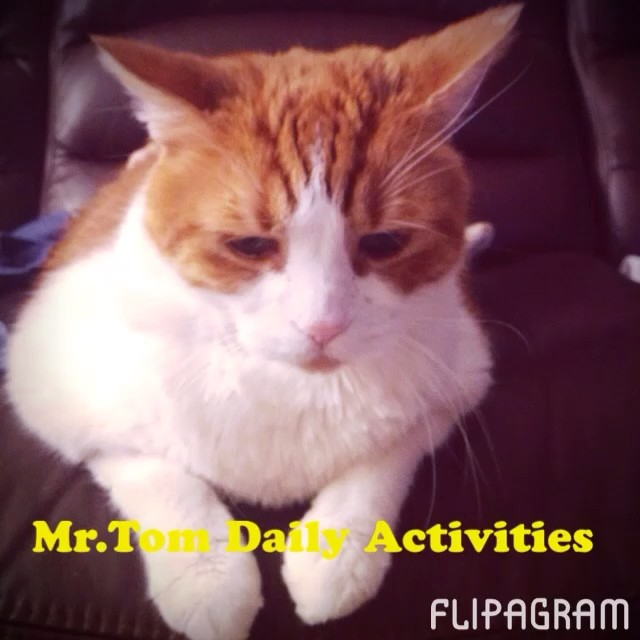 Mr.Tom Daily Activities made with @flipagram ♫ Music: Avicii - Wake Me Up