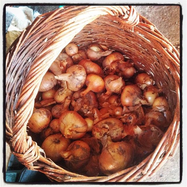 Romanian country basket with onion