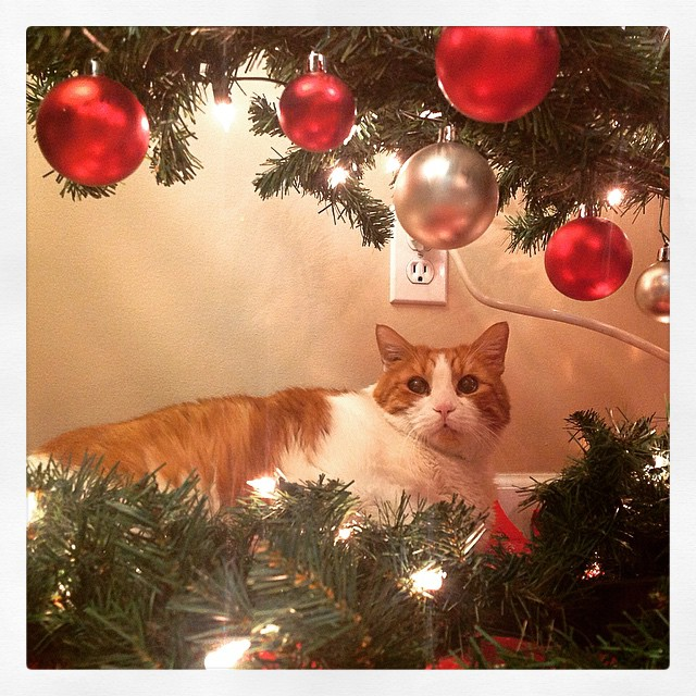 Mr. Tom hides under the tree