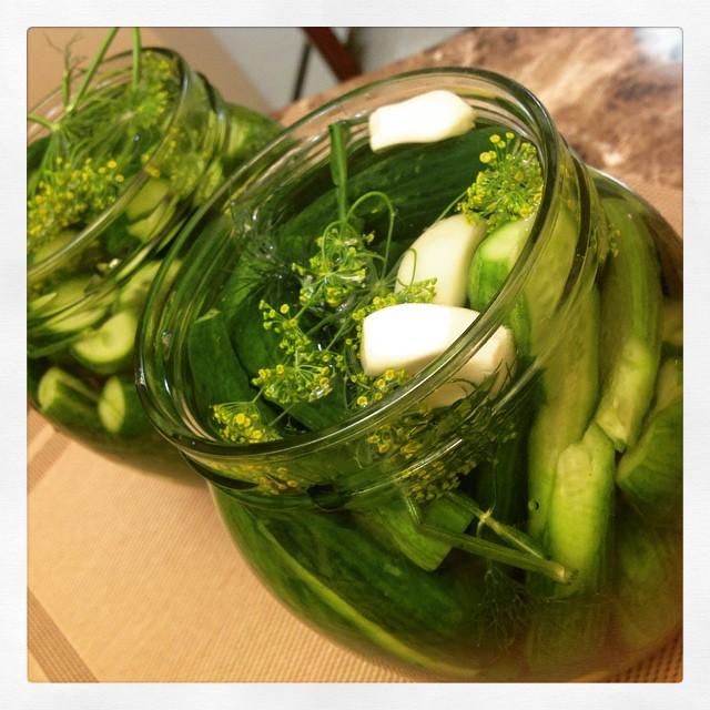 Sun pickle cucumbers